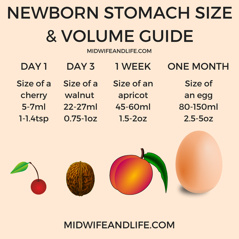 newborn-stomach-size-and-volume-picture-image-midwifeandlife.com