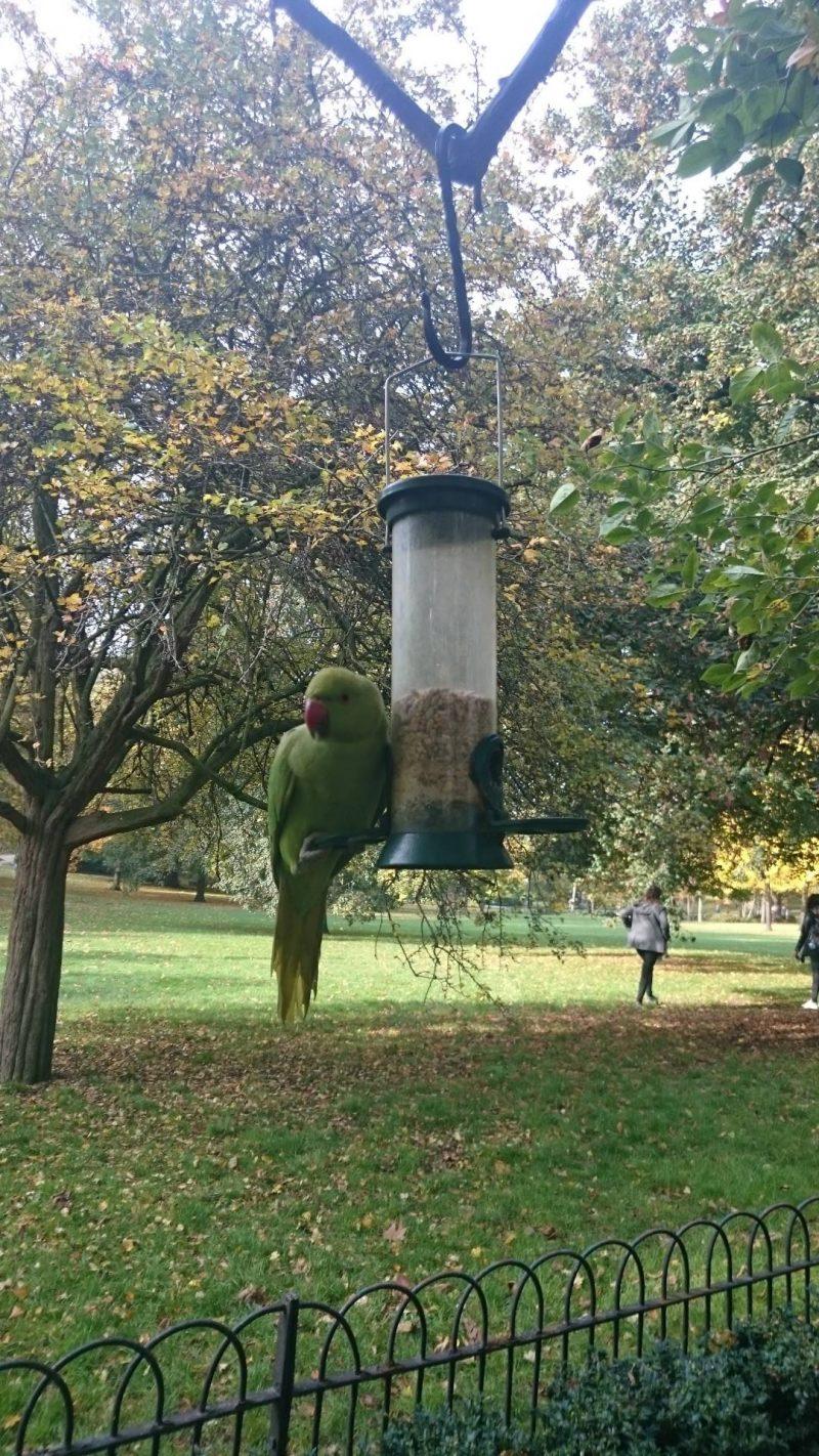 bird-life-hyde-park-london