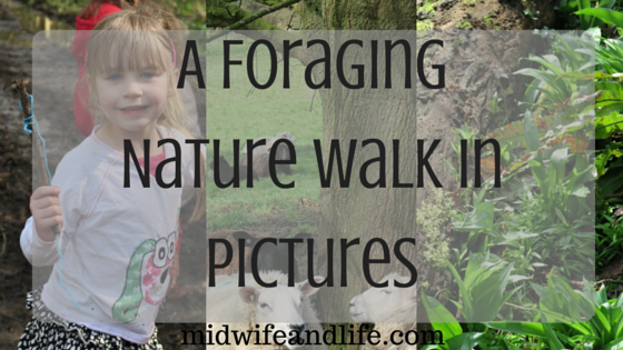 A Foraging Nature Walk in Pictures