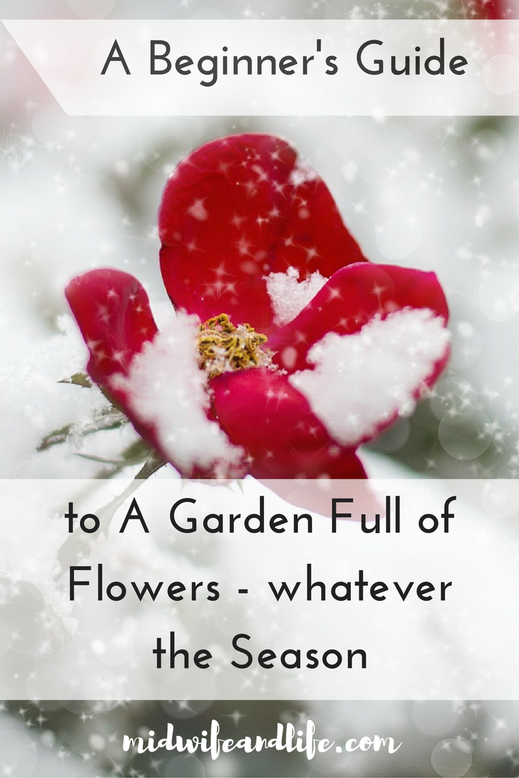 A Beginner's Guide to a Garden Full of Flowers - Whatever the season.