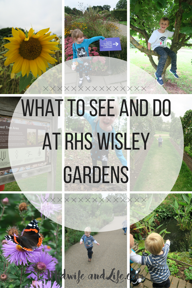 What to see and do at Wisley Gardens, plus the #mamiadaysout challenge, looking at the organic Aldi Mamia on the go snack range. An autumn sunshine day out with my little explorers. #daysout #picnic #babyfood