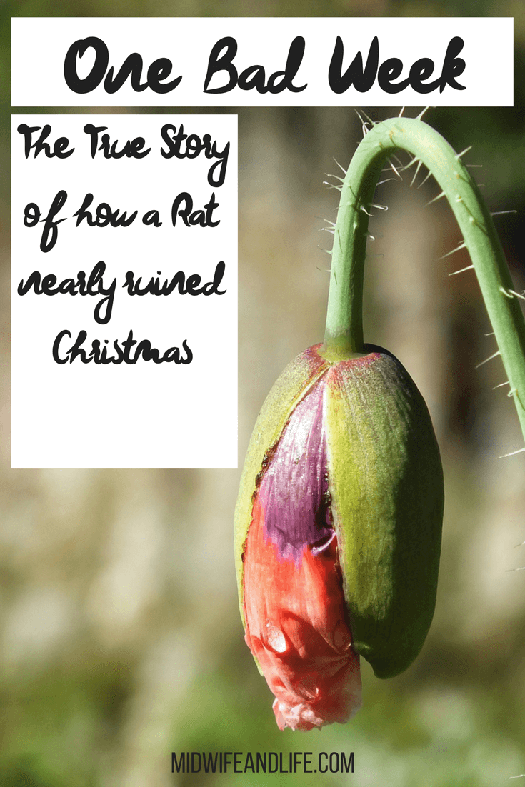 Have you ever had a succession of events that left you flat broke? Are you prepared? Read my true story of how a rat nearly ruined Christmas!