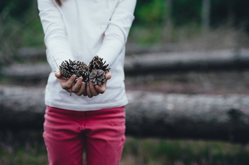 collecting-pine-cones-craft-ideas