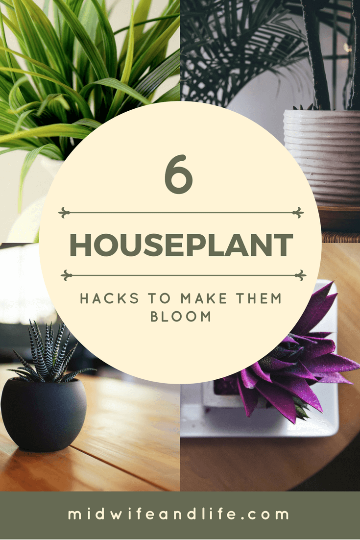 If you need a bit of help keeping your house plants alive, check out these simple hacks for a blooming array of plants in the home