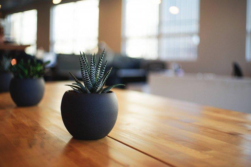 house-plant-hacks