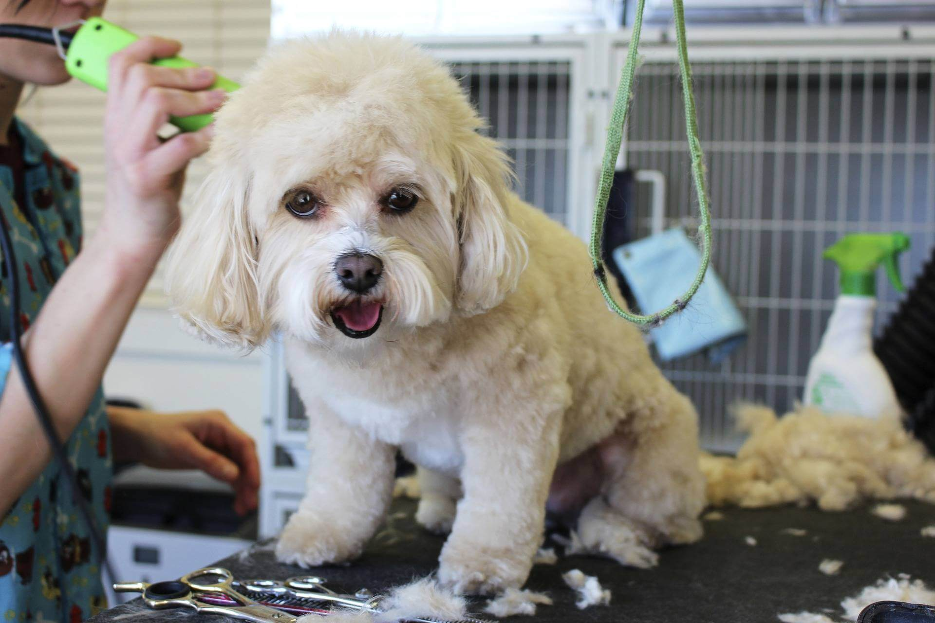 home-dog-grooming-tips-hacks-clippers