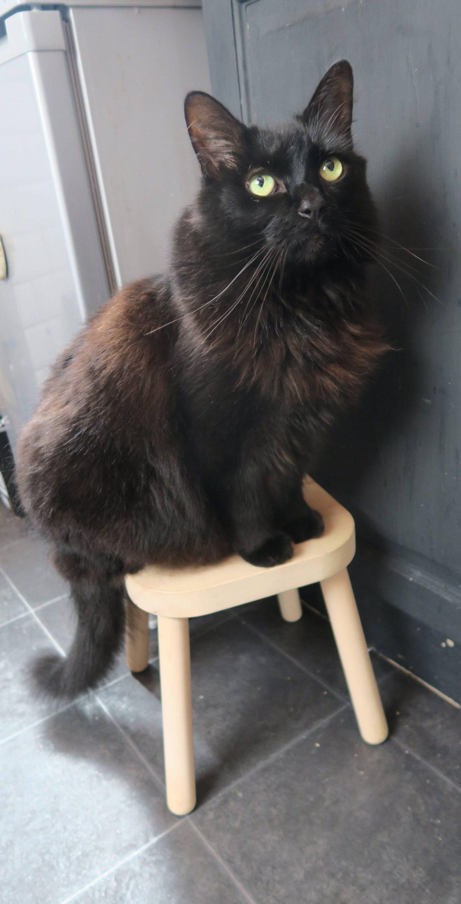 whiskas-date-night-cat