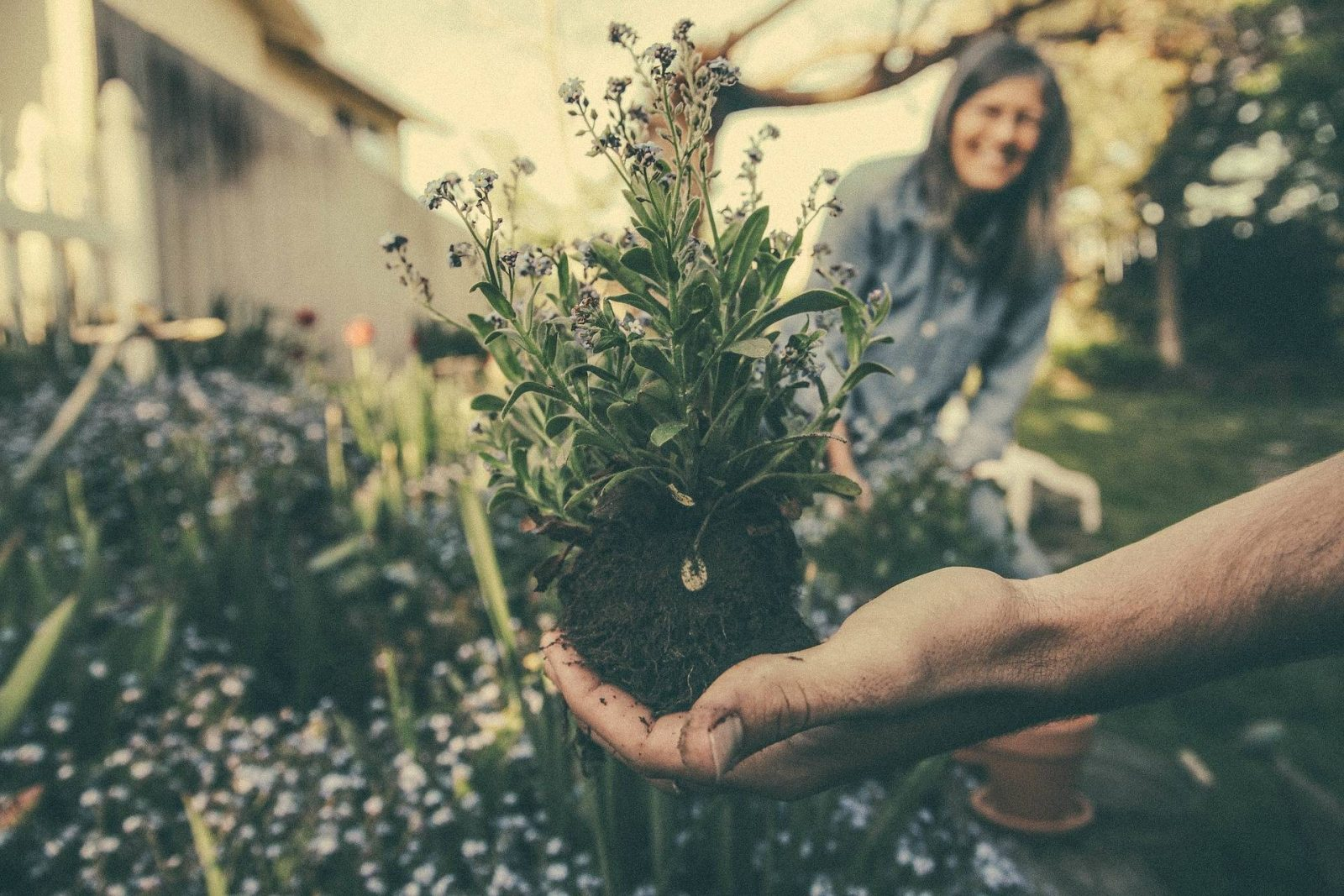 How to Prepare Early Autumn Garden Redecoration
